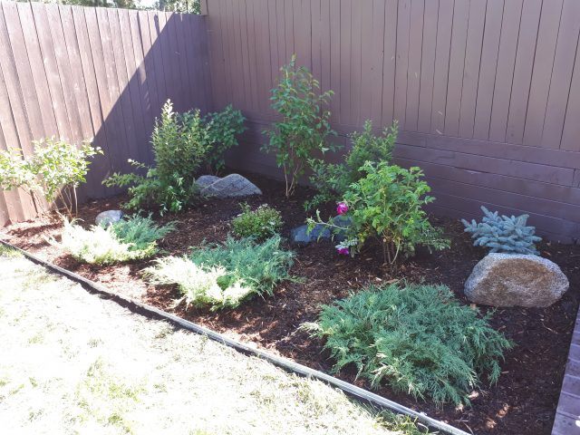 Updated Shrub Bed
