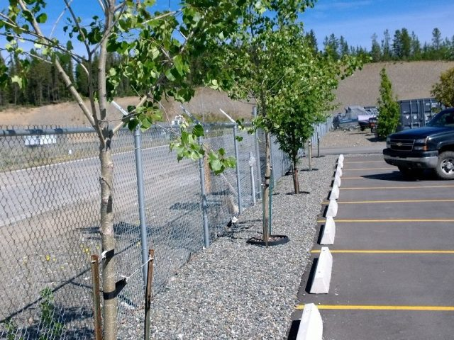 Trees Added To New Parking Lot Perimeter