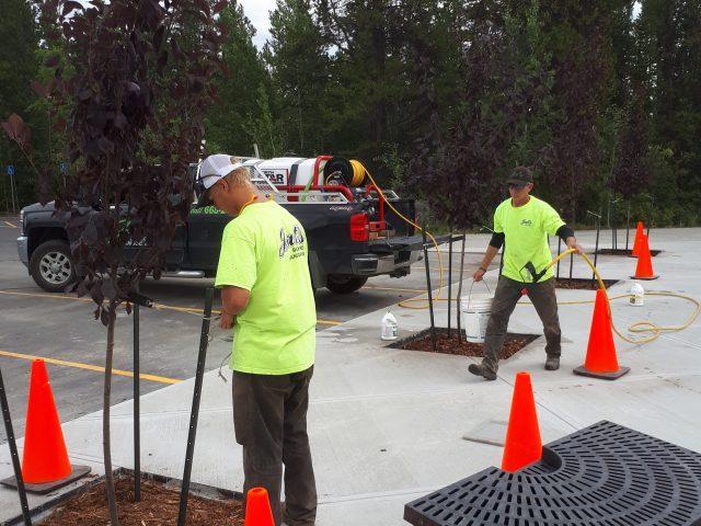Tree Installation For Yukon Beringia Interpretive Centre